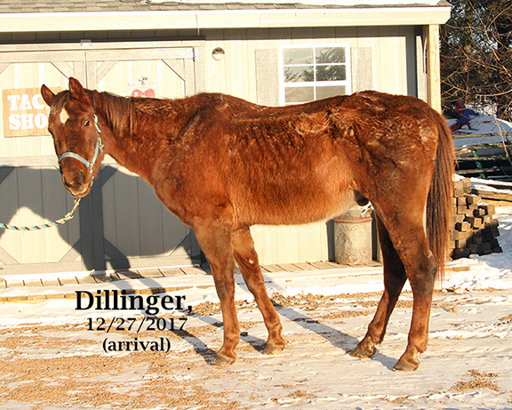 Name: dillinger2-dec27-IMG_1434-copy.jpg, Views: 608, Size: 369.23 KB