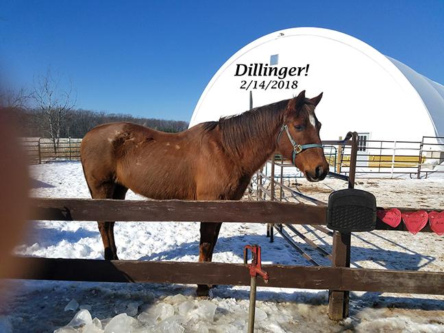 Name: dillinger-feb14-20180214_121547_resized.jpg, Views: 617, Size: 262.12 KB