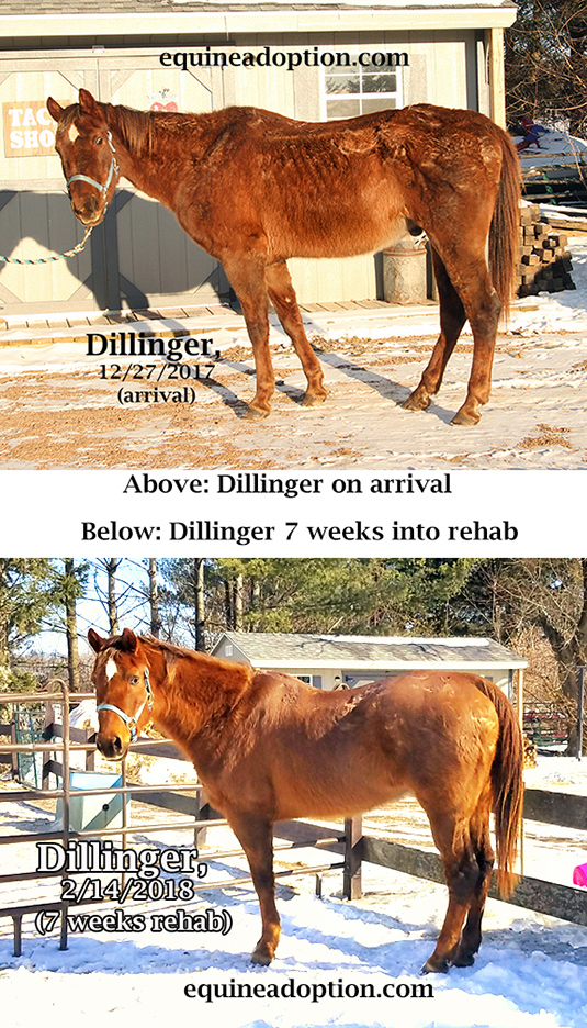 Name: DILLINGER-ARRIVAL-AND-7-WEEKS-INTO-REHAB.jpg, Views: 607, Size: 391.46 KB