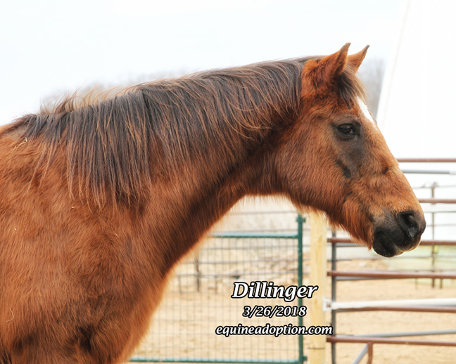 Name: dillinger-march26-IMG_2644-copy.jpg, Views: 479, Size: 275.38 KB