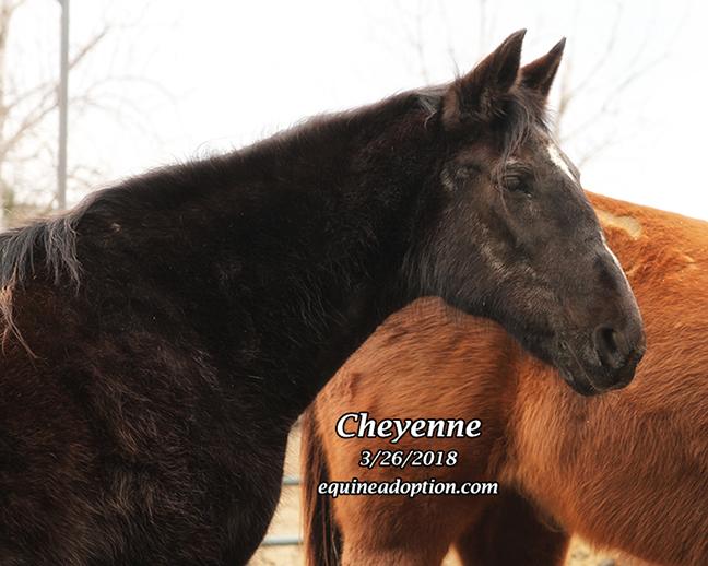 Name: cheyenne-march26-IMG_2646-copy.jpg, Views: 184, Size: 261.60 KB