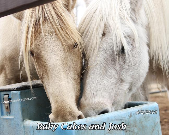 Name: babycakes-josh-april2-IMG_2755-copy.jpg, Views: 117, Size: 335.21 KB