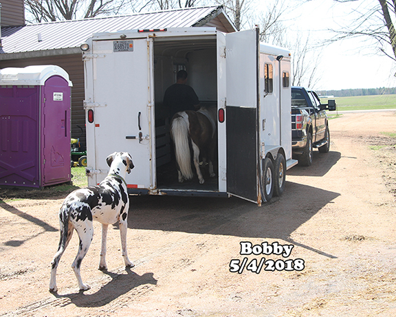Name: bobby3-adoption-day-may4-IMG_3230-copy.jpg, Views: 182, Size: 315.10 KB