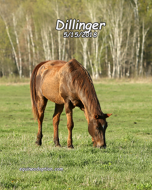 Name: dillinger-may15-IMGL2021-copy.jpg, Views: 336, Size: 366.74 KB