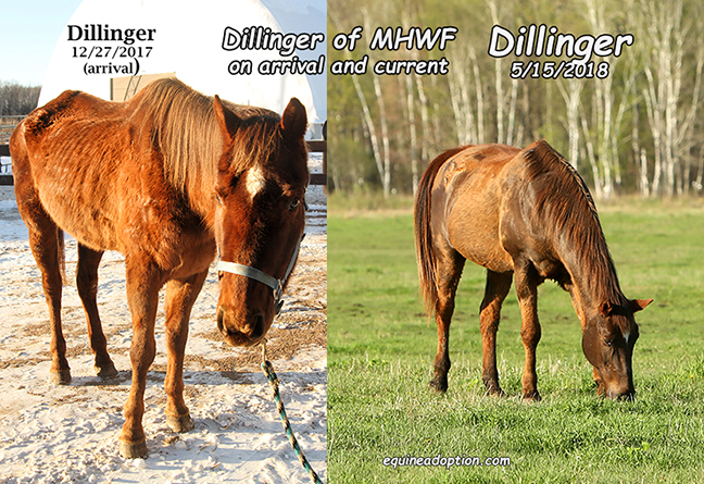 Name: dillinger-before-and-may15.jpg, Views: 332, Size: 400.21 KB
