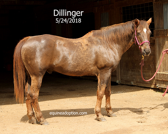 Name: dillinger1-may24-IMG_3855-copy.jpg, Views: 289, Size: 281.89 KB