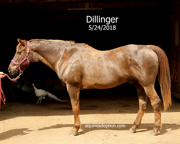 Name: dillinger2-may24-IMG_3843-copy.jpg, Views: 290, Size: 234.05 KB