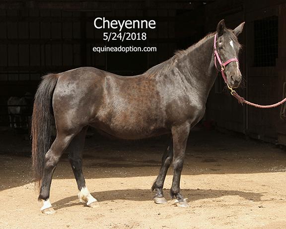 Name: cheyenne1-may24-IMG_3909-copy.jpg, Views: 120, Size: 235.27 KB