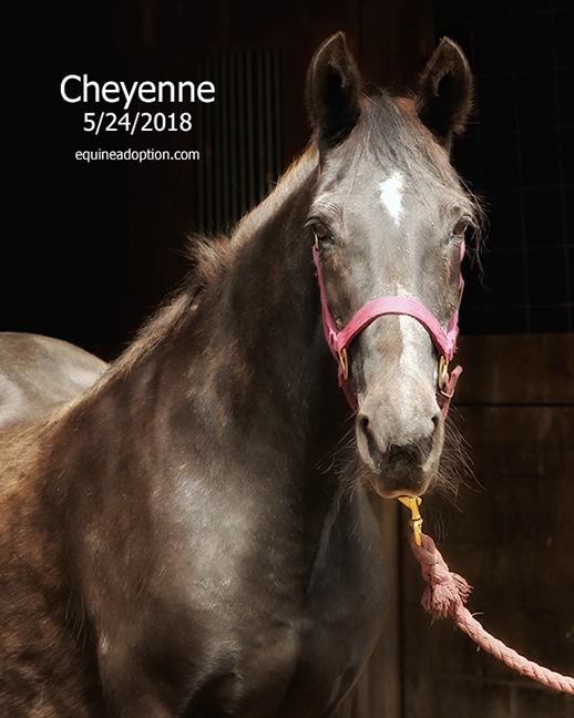 Name: cheyenne3-face-may24-IMG_3918-copy.jpg, Views: 125, Size: 217.28 KB
