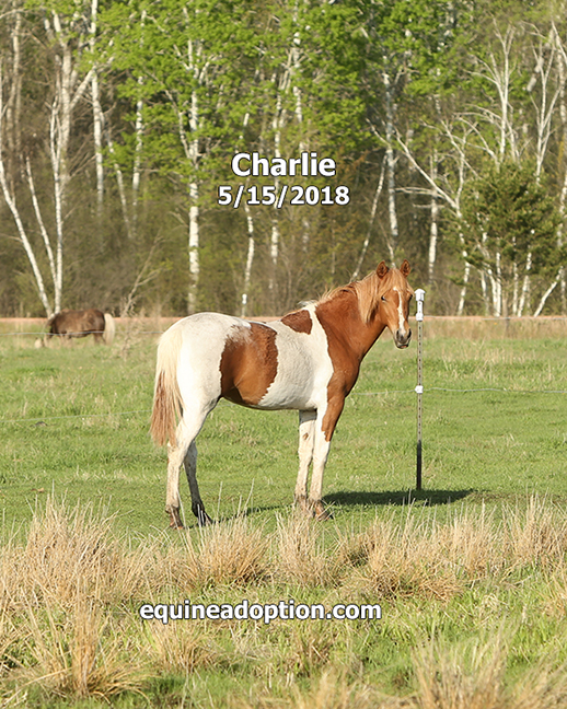 Name: charlie-may15-IMGL2046-copy.jpg, Views: 364, Size: 428.99 KB