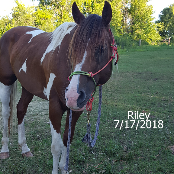 Name: riley2-july17.jpg, Views: 1269, Size: 350.11 KB