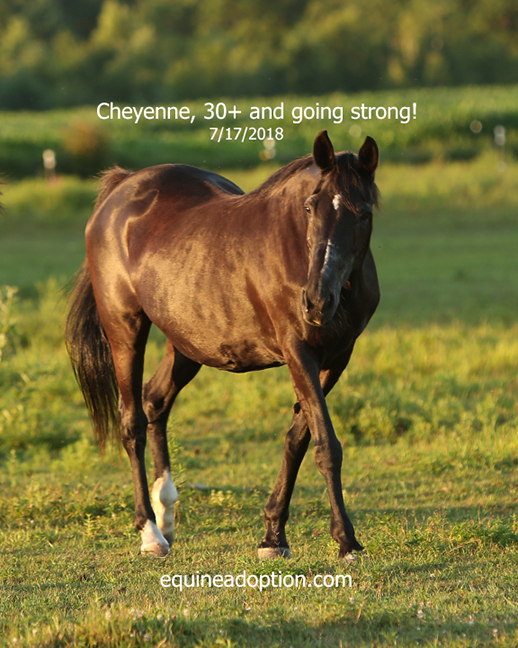 Name: cheyenne-july17-IMGL3198-copy.jpg, Views: 166, Size: 324.42 KB