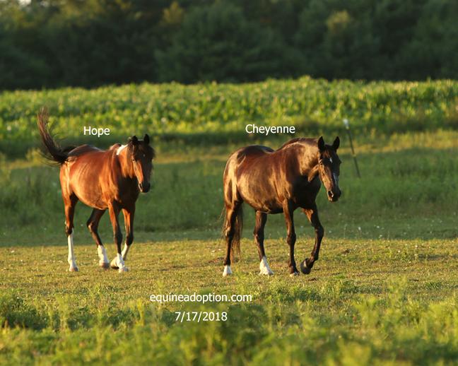 Name: cheyenne-hope-july17-IMGL3187-copy.jpg, Views: 167, Size: 315.88 KB