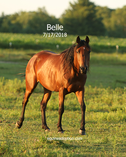 Name: belle-arab-july17-IMGL3199-copy.jpg, Views: 793, Size: 336.75 KB