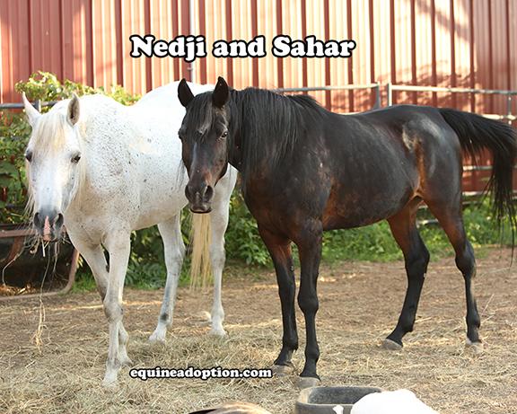 Name: nedji-sahar3-july17.jpg, Views: 471, Size: 312.38 KB