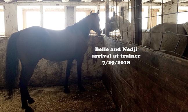 Name: belle-nedji-july29-training-20180729_140256-copy.jpg, Views: 497, Size: 208.45 KB