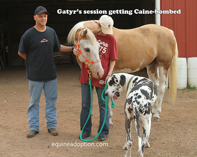 Name: gatyr1-caine-bomb-july31-adoption-day-IMG_4939-copy.jpg, Views: 139, Size: 330.14 KB