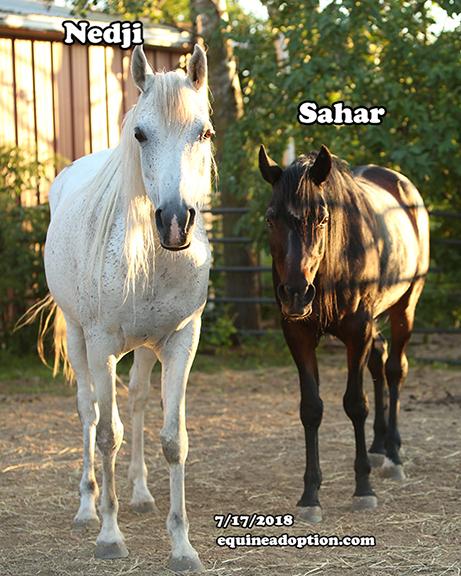Name: nedji-sahar-july17-IMGL3156-copy.jpg, Views: 285, Size: 315.93 KB
