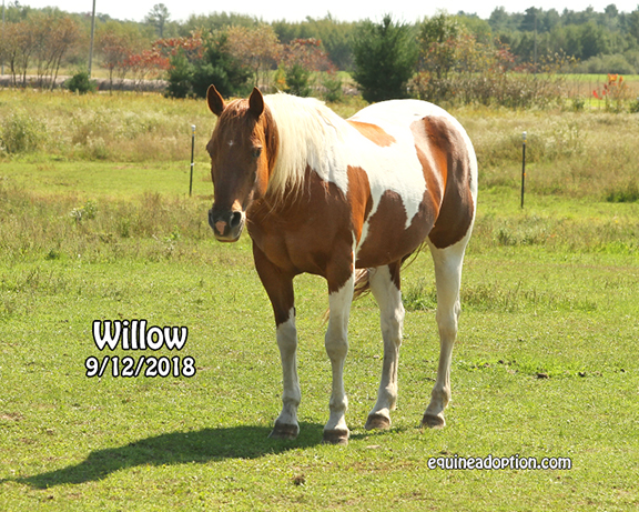 Name: willow-sept12-IMG_7426-copy.jpg, Views: 477, Size: 345.25 KB