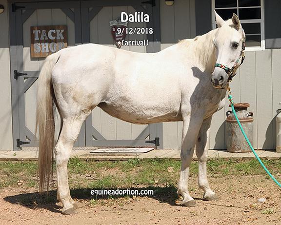 Name: dalila1-sept12-IMG_7467-copy.jpg, Views: 139, Size: 287.69 KB