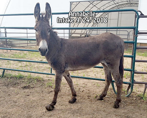 Name: donkey-annabelle1-sept24.jpg, Views: 1237, Size: 306.03 KB