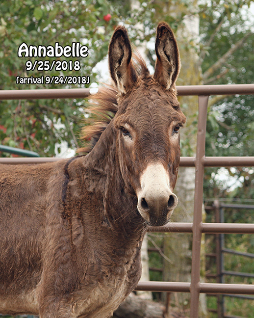Name: donkey-annabelle-face-sept25-IMG_7706-copy.jpg, Views: 1245, Size: 360.90 KB
