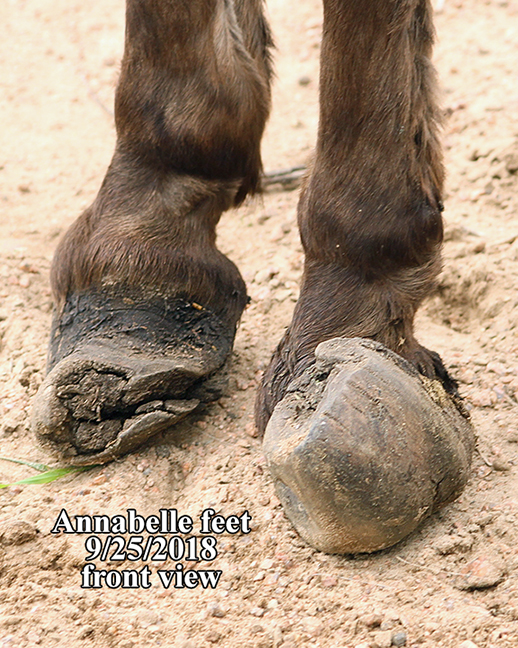 Name: donkey-annabelle-feet-sept25-IMG_7638-copy.jpg, Views: 1252, Size: 405.40 KB