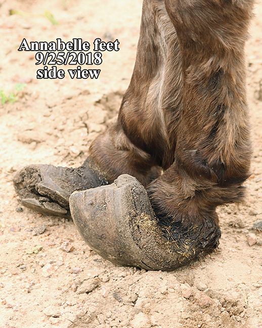 Name: donkey-annabelle-feet-sept25-IMG_7656-copy.jpg, Views: 1244, Size: 421.07 KB
