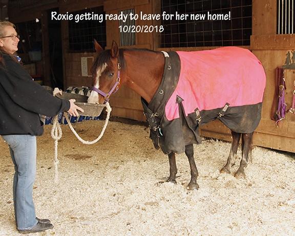 Name: roxie-on-adoption-day-oct20-IMG_7918-copy.jpg, Views: 139, Size: 338.33 KB