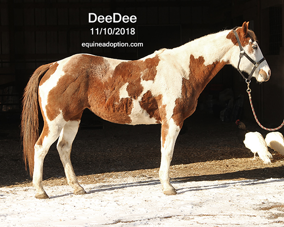 Name: deedee1-nov10-IMG_8565-copy.jpg, Views: 188, Size: 260.73 KB