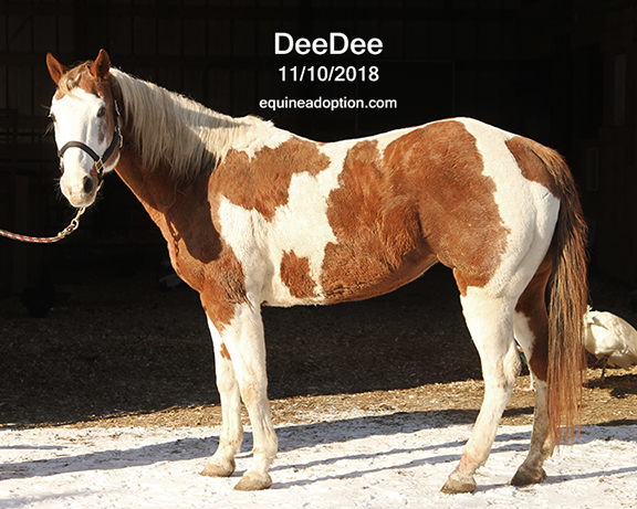Name: deedee2-nov10-IMG_8554-copy.jpg, Views: 182, Size: 249.06 KB