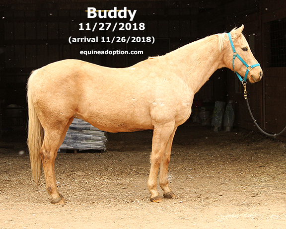 Name: BUDDY1-NOV27-IMG_8851-copy.jpg, Views: 406, Size: 307.51 KB