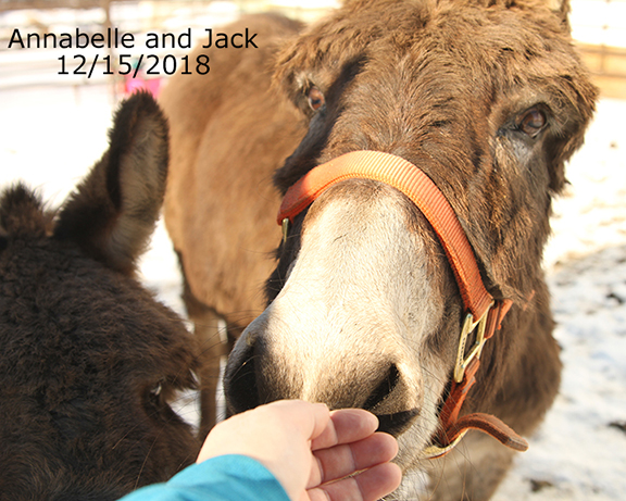 Name: annabelle-jack-dec15-IMG_9074-copy.jpg, Views: 944, Size: 273.35 KB