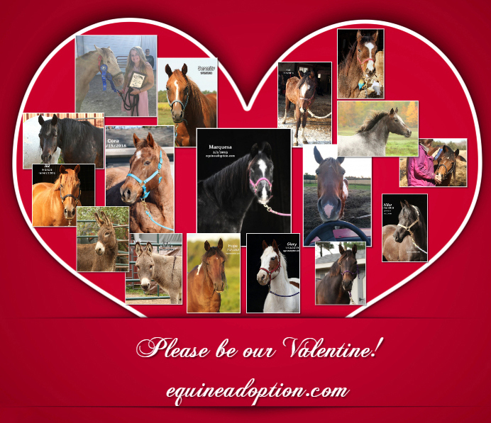 Name: valentine-horses-Heart-shaped-Collage-copy.jpg, Views: 112, Size: 335.35 KB
