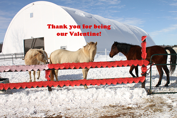Name: valentines-fence3-babycakes-pal-belle-IMG_9523-copy.jpg, Views: 26, Size: 425.59 KB