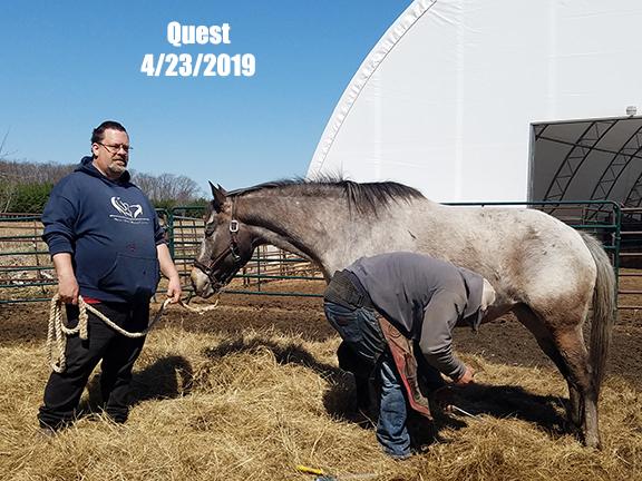 Name: quest-trim-april23-20190423_112648-copy.jpg, Views: 354, Size: 232.72 KB