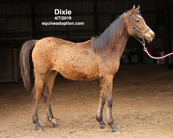Name: dixie1-april7-IMG_9953-copy.jpg, Views: 1032, Size: 236.99 KB