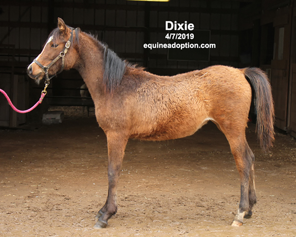 Name: dixie2-april7-IMG_9936-copy.jpg, Views: 1040, Size: 232.46 KB