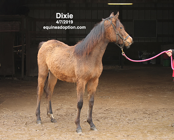 Name: dixie-april7-extra-IMG_9949-copy.jpg, Views: 1034, Size: 234.54 KB