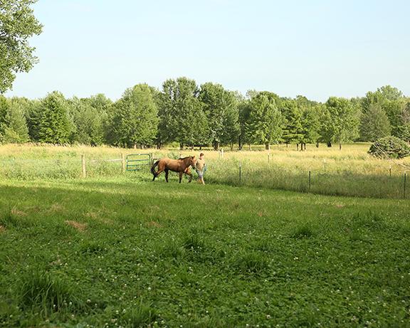 Name: spirit3-adoption-pasture-IMGL6186-copy.jpg, Views: 1054, Size: 317.03 KB