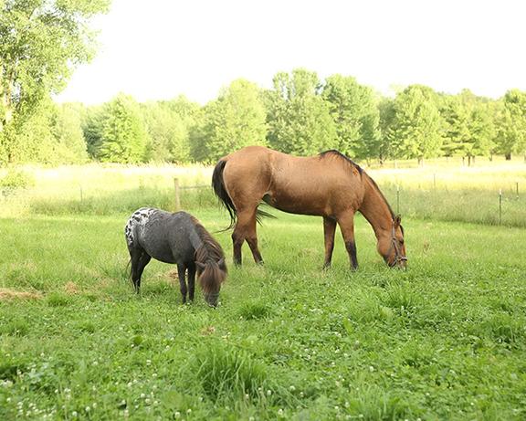 Name: spirit4-adoption-pasture-friend-IMGL6225-copy.jpg, Views: 1058, Size: 309.75 KB