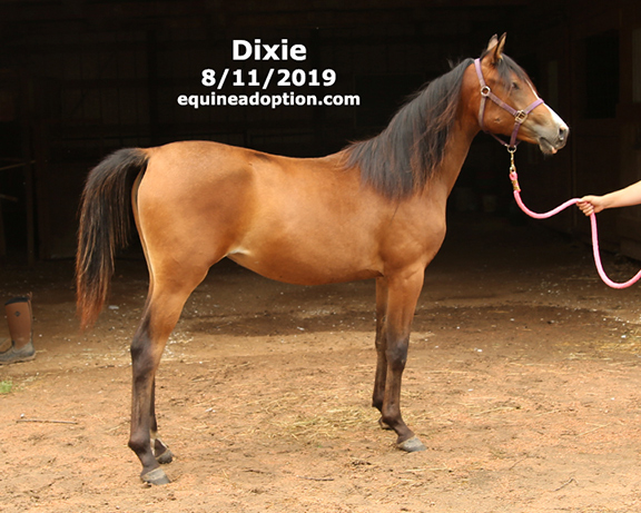 Name: dixie1-aug11-IMGL6635-copy.jpg, Views: 850, Size: 190.76 KB