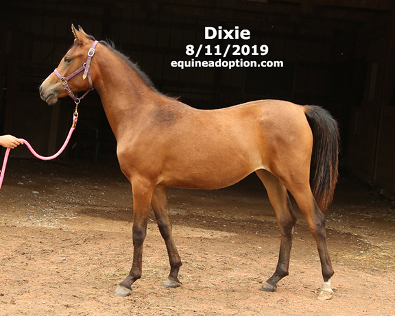 Name: dixie2-aug11-IMGL6644-copy.jpg, Views: 851, Size: 204.84 KB