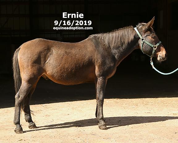 Name: ernie-mule1-sept16-2019-IMGL8171-copy.jpg, Views: 924, Size: 196.62 KB
