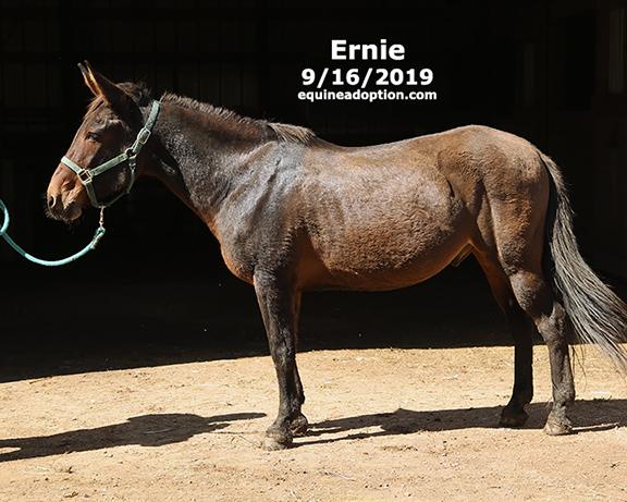 Name: ernie-mule2-sept16-2019-IMGL8178-copy.jpg, Views: 930, Size: 203.90 KB