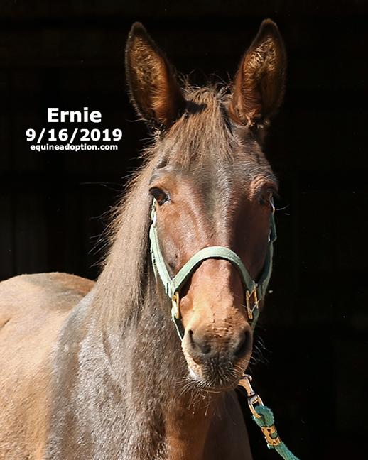 Name: ernie-mule3-sept16-2019-IMGL8163-copy.jpg, Views: 929, Size: 204.64 KB