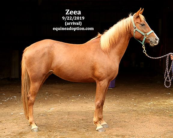 Name: zeea1-sept22-IMGL8192-copy.jpg, Views: 1248, Size: 209.49 KB