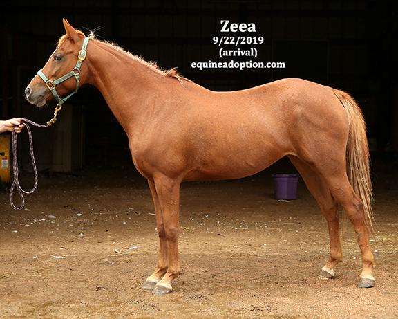 Name: zeea2-sept22-IMGL8204-copy.jpg, Views: 1252, Size: 223.17 KB