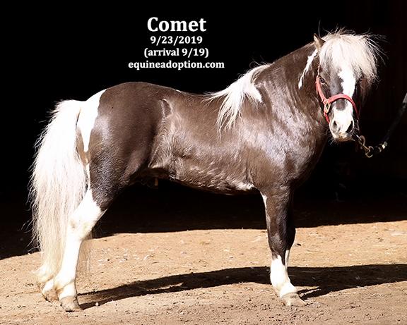 Name: comet1-sept23-IMGL8278-copy.jpg, Views: 981, Size: 194.93 KB