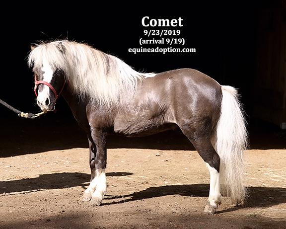 Name: comet2-sept23-IMGL8261-copy.jpg, Views: 875, Size: 188.07 KB